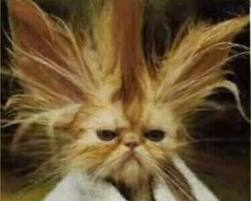 stressed cat